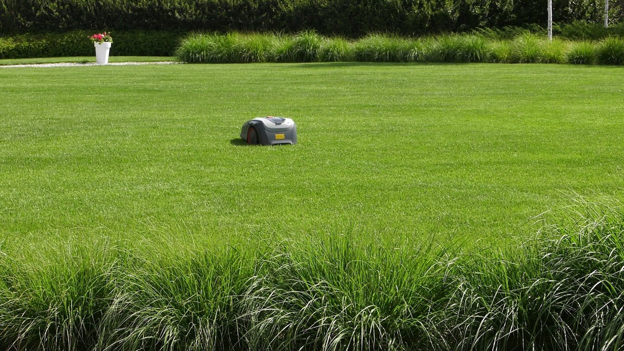 trawnik wysokość koszenie, trawnik, jak kosić trawnik, jak wysoko kosić trawnik, jak nisko kosić trawnik, wysokość koszenia trawnika, koszenie trawnika,