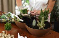 Sukulenty w tym kaktusy – Jak zrobić ciekawą kompozycje?