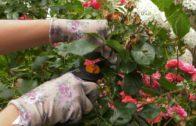 Kalendarz ogrodnika na 01.07 – 07.07 – lipiec w ogrodzie