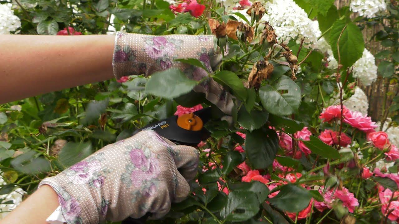 lipiec w ogrodzie, kalendarium ogrodnika, kalendarz ogrodniczy, rok w ogrodzie, tydzień w ogrodzie