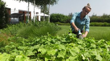 Kalendarz ogrodnika na 15.07 – 21.07 – lipiec w ogrodzie