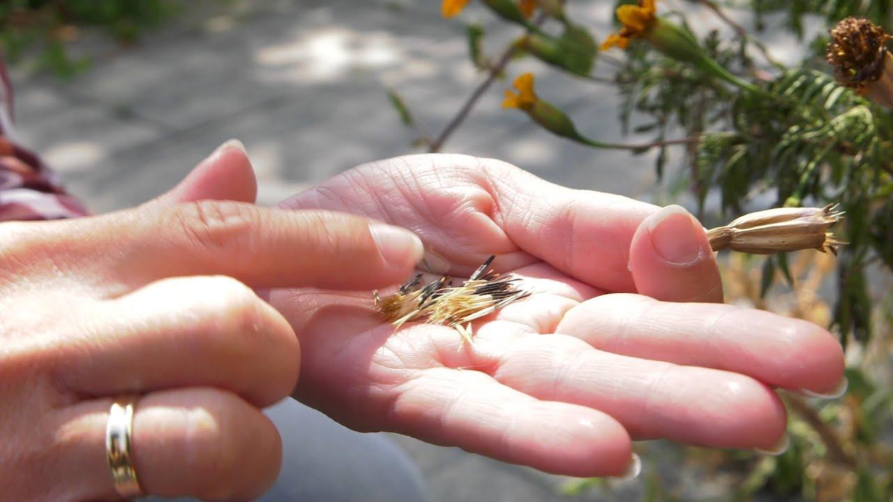 Kalendarz ogrodnika na 22.07 – 28.07 – lipiec w ogrodzie
