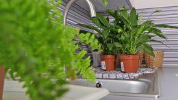 Przygotowanie domowych roślin przed urlopem