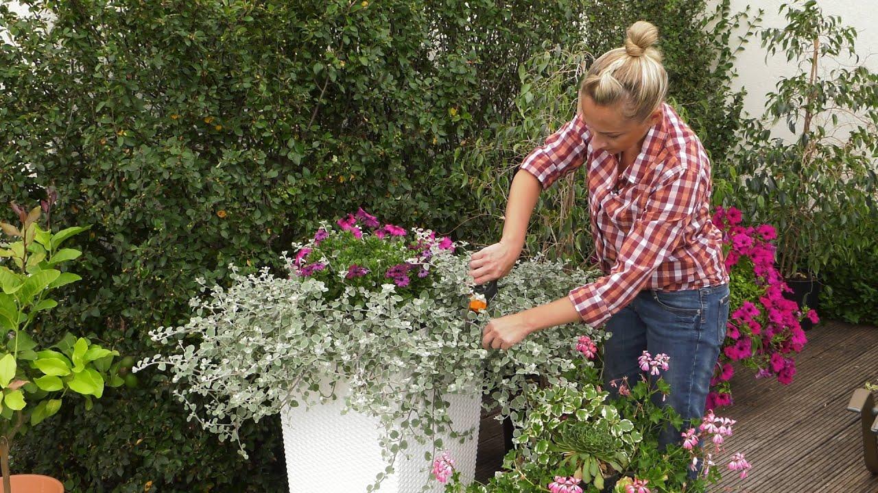 Rośliny balkonowe i tarasowe – letnie zabiegi – przypomnienie