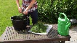Skrzyp polny – jak wykorzystać w ogrodzie