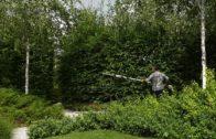Żywopłot liściasty – Jak przycinać i kiedy?