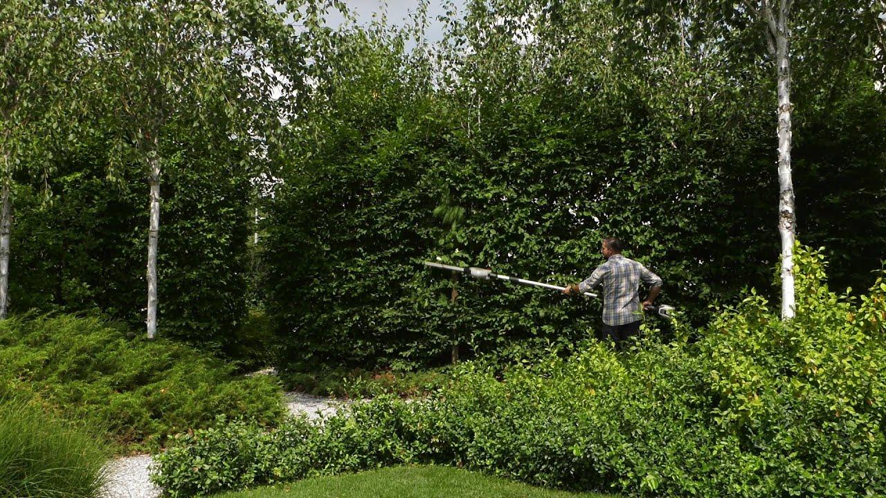 Żywopłot liściasty, przycinanie żywopłotu, żywopłot z grabów, żywopłot z irgi, jak przycinać żywopłot, czym przycinać żywopłot,