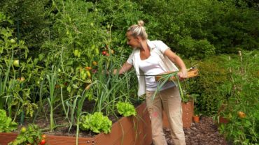 Kalendarz ogrodnika na 05.08 – 11.08 – sierpień w ogrodzie