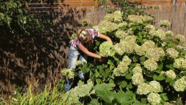 Kalendarz ogrodnika na 23.09 – 29.09 – wrzesień w ogrodzie