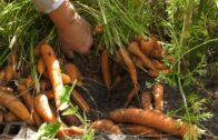Wrzesień w ogrodzie – Kalendarz ogrodnika na 09.09 – 15.09