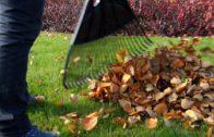 Kalendarz ogrodnika na 07.10 – 13.10 – październik w ogrodzie