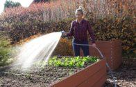 Kalendarz ogrodnika na 14.10 – 20.10 – październik w ogrodzie