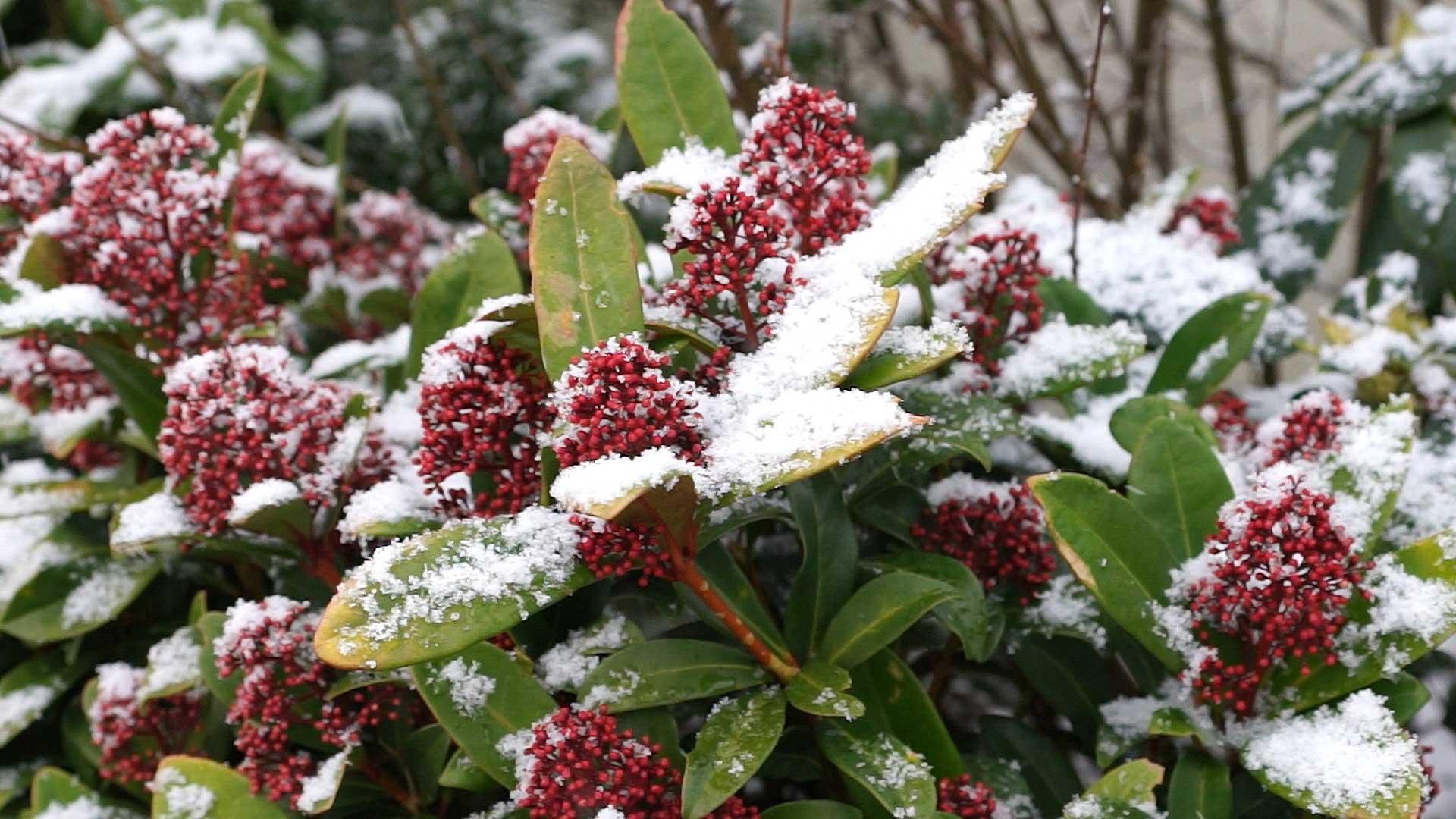 Kalendarz ogrodnika na 16.12 – 22.12 – grudzień w ogrodzie