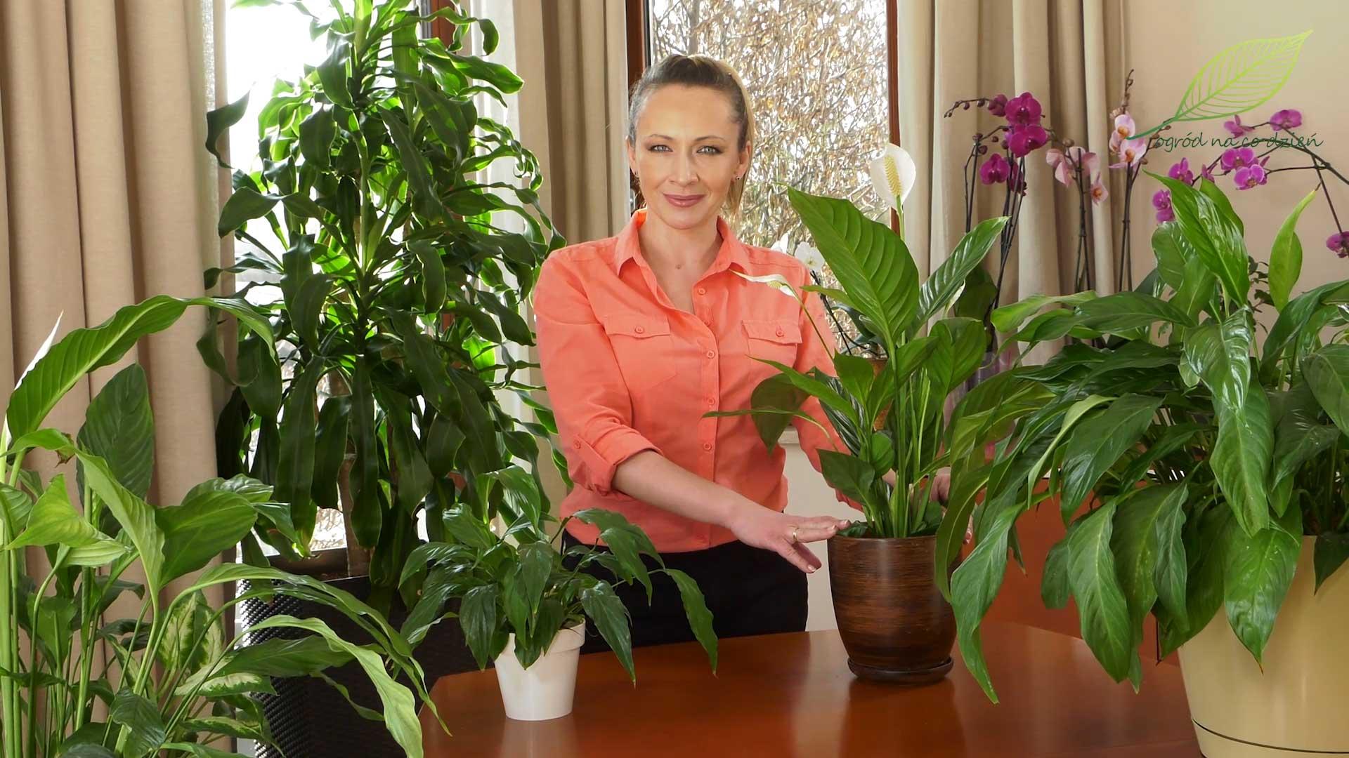 Skrzydłokwiaty – rozmnażanie i uprawa