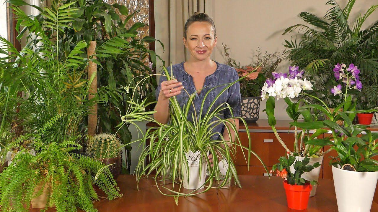 Rośliny domowe w styczniu