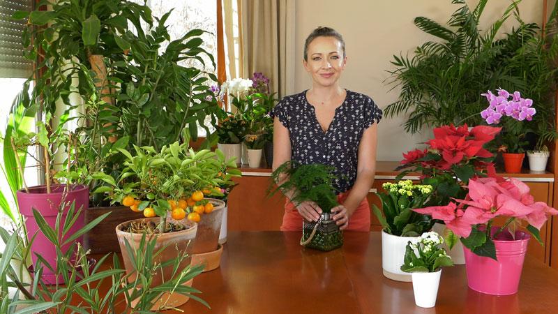 Rośliny domowe w lutym