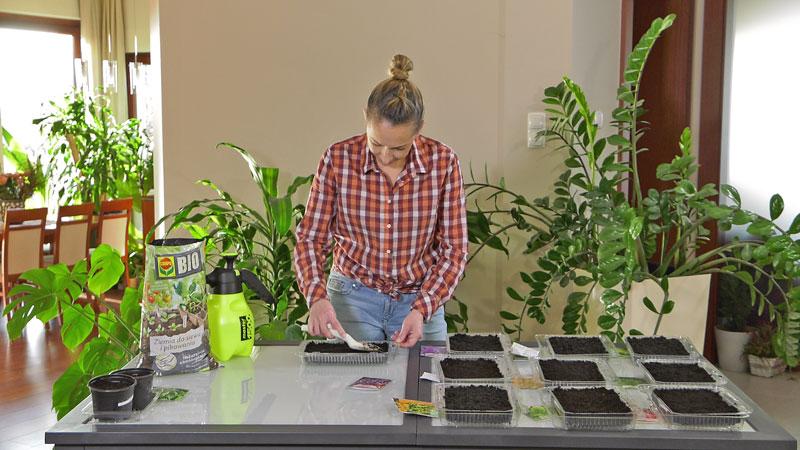 Wysiew warzyw w lutym