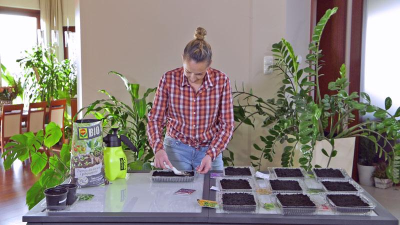 uprawa warzyw, lutowe wysiewy, termin siewu warzyw, co wysiać w lutym