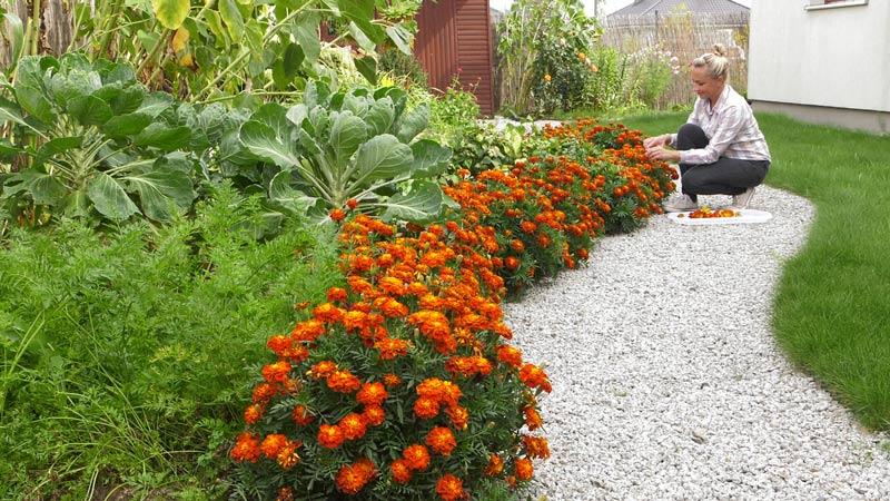 Uprawa współrzędna warzyw