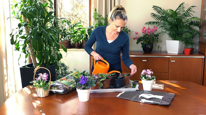 Rośliny domowe w marcu