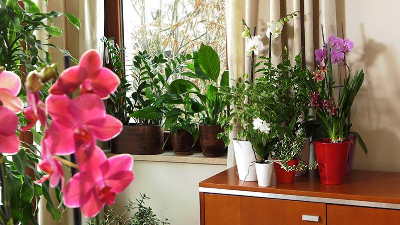 umiejscowienie roślin w mieszkaniu