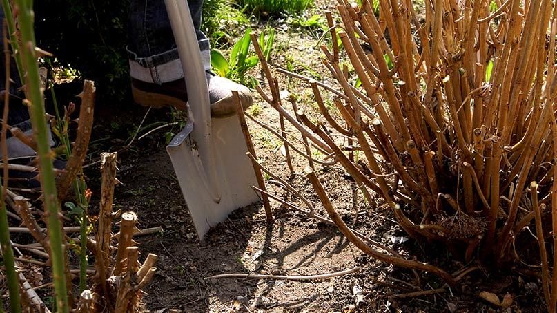 Rozmnażanie hortensji, wertykulacja trawnika i pikowanie rozsad kwiatów