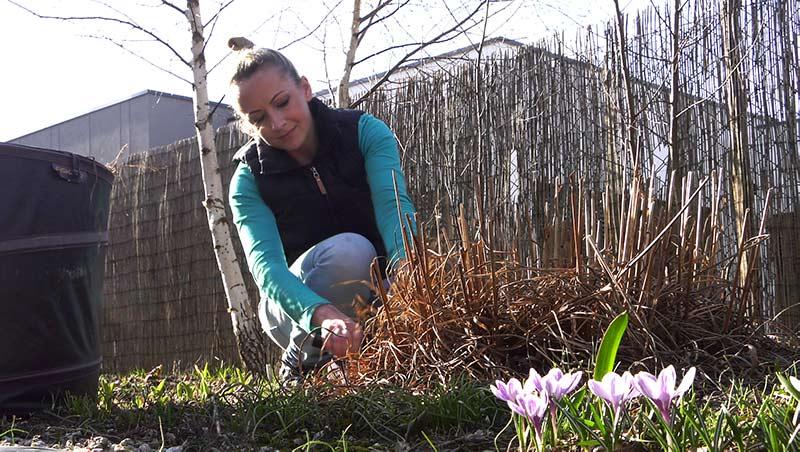 Marzec w ogrodzie – 09.03-15.03 – kalendarz ogrodnika