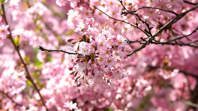 Kwiecień w ogrodzie – 30.03-05.04 – kalendarz ogrodnika