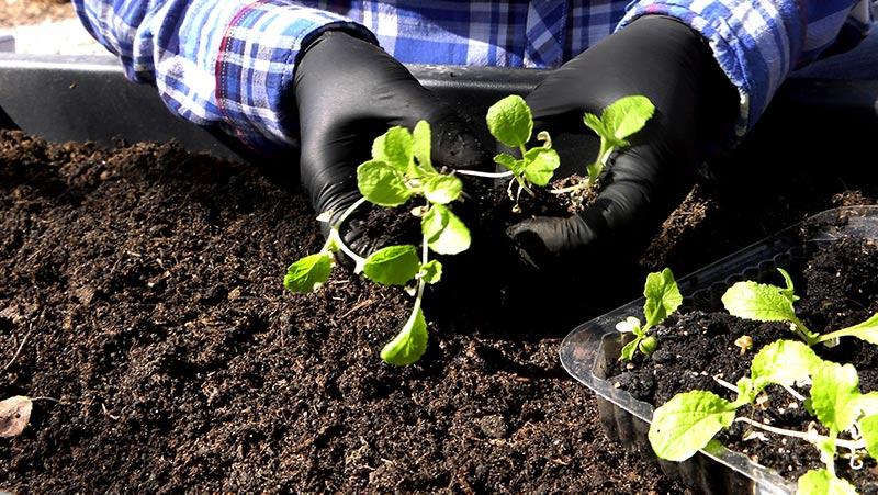Wysiew warzyw w kwietniu w pojemnikach