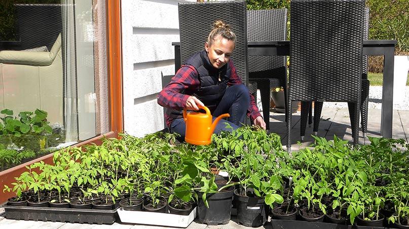 hartowanie rozsad, uprawa warzyw, ogród warzywny, wysiew w kwietniu