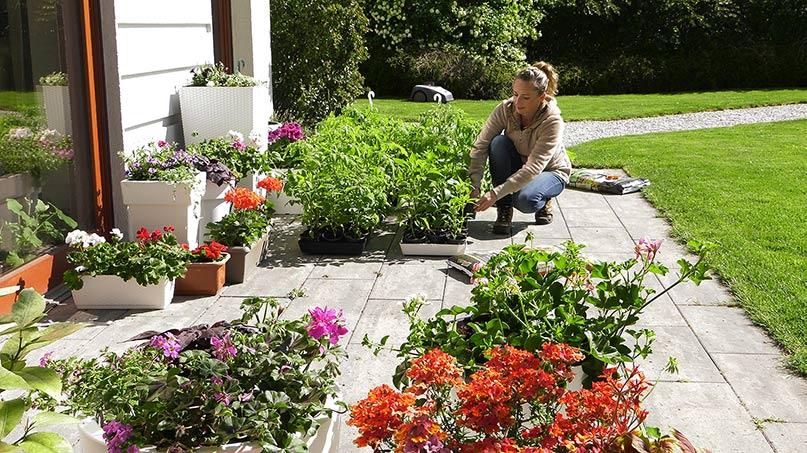 Zimni ogrodnicy w warzywniku