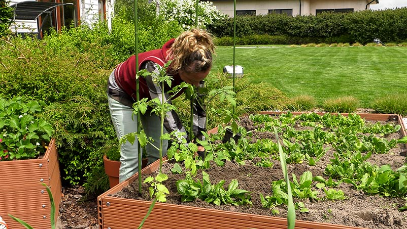 Sadzenie pomidorów i papryki