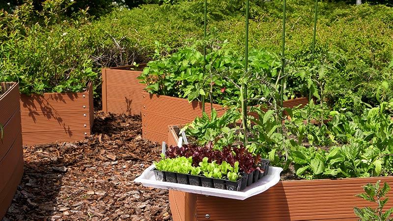 Ogród warzywny – cukinie, por i sałata