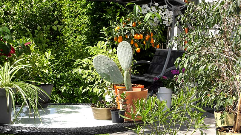 Czy wystawiać domowe rośliny na balkon i taras