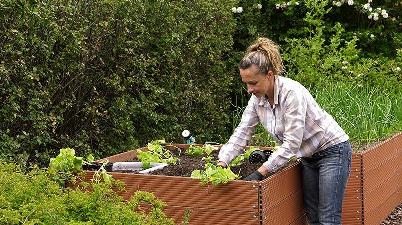 Sadzenie ogórków i dyni oraz mszyce na warzywach