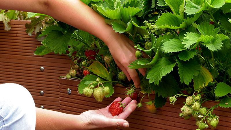 Czerwiec w ogrodzie – 22.06 -28.06 – kalendarz ogrodnika