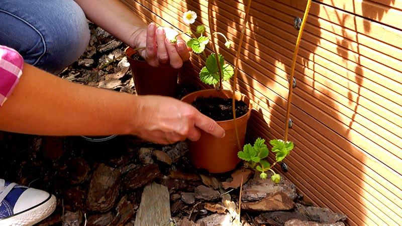 Lipiec w ogrodzie – 29.06 -05.07 – kalendarz ogrodnika
