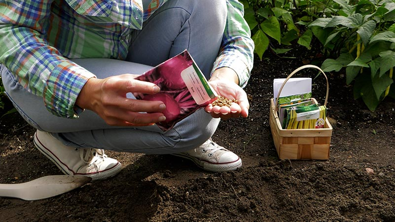 Jakie rośliny możemy wysiać w lipcu w warzywniku