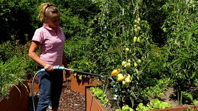 Ogród warzywny – papryka i pomidory