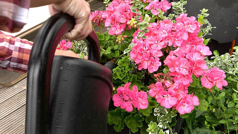Lipiec w ogrodzie – 06.07 -12.07 – kalendarz ogrodnika