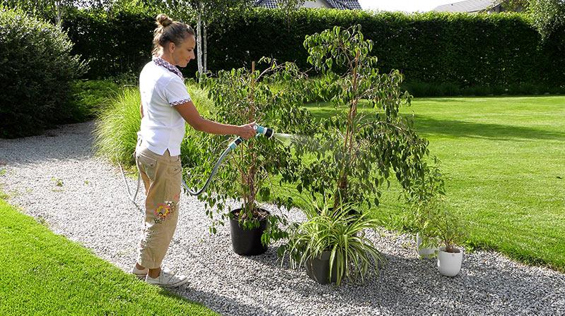 Lipiec w ogrodzie – 27.07 -02.08 – kalendarz ogrodnika