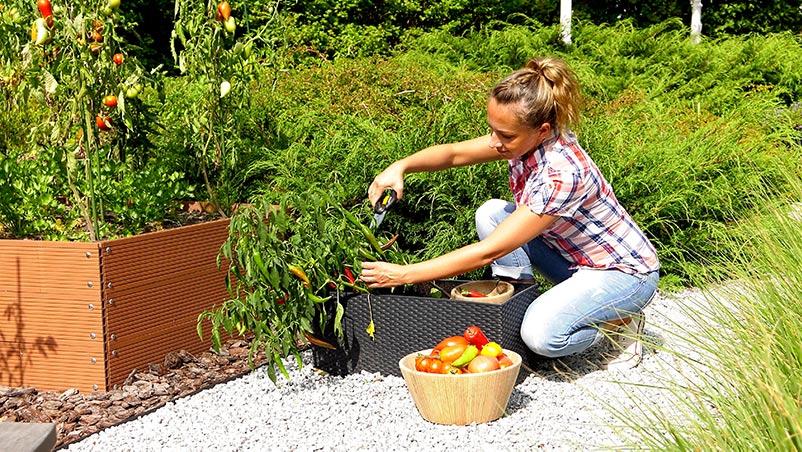 Letnia pielęgnacja warzywnika