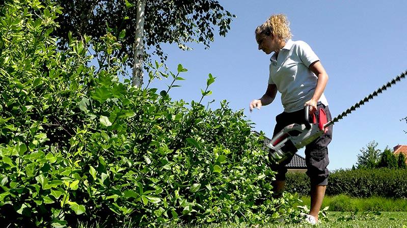 Sierpień w ogrodzie – 10.08 -16.08 – kalendarz ogrodnika
