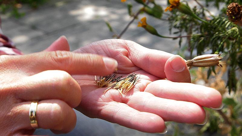 Sierpień w ogrodzie – 24.08 -30.08 – kalendarz ogrodnika
