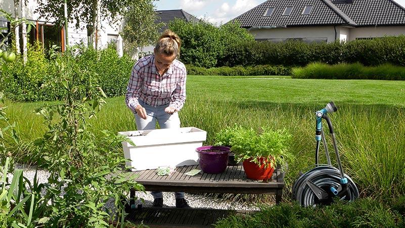 Ogród warzywny we wrześniu