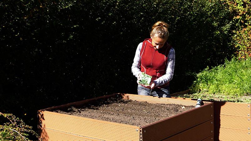 Warzywa w ogrodzie – papryka, patison i wysiew szpinaku