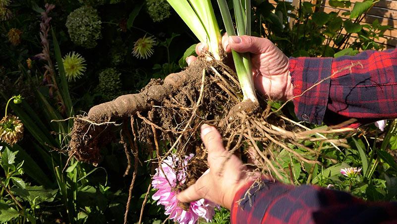Wrzesień w ogrodzie – 21.09 -27.09 – kalendarz ogrodnika