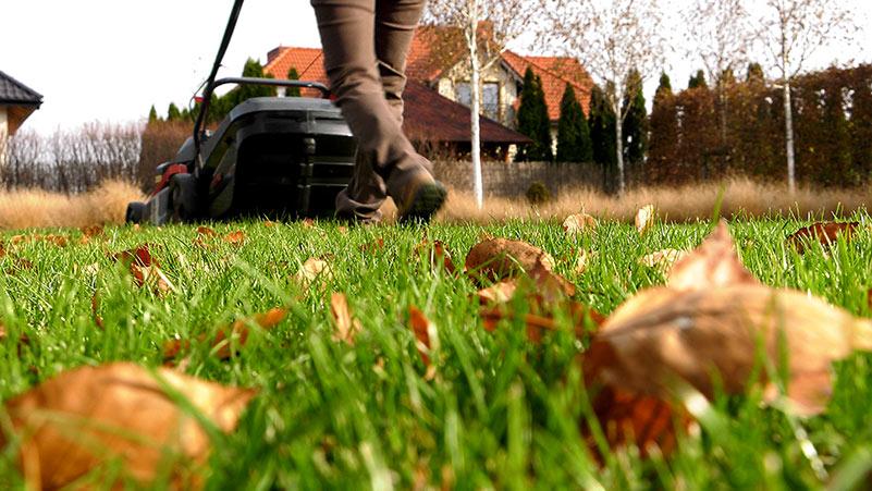 Listopad w ogrodzie – 02.11 -08.11 – kalendarz ogrodnika