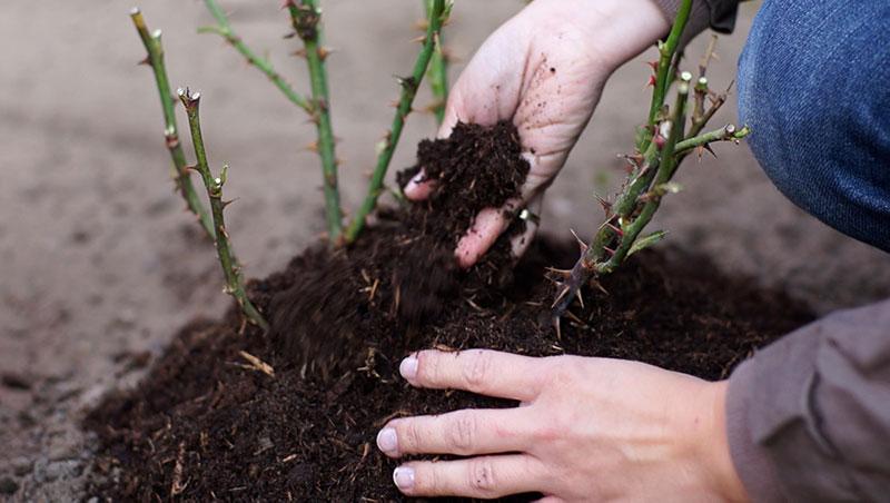 Grudzień w ogrodzie – 30.11 -06.12 – kalendarz ogrodnika