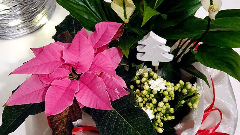 Świąteczne dekoracje z roślinami w kolorze różowym